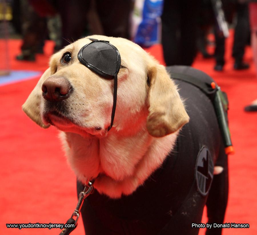Nick Fury Dog of Shield