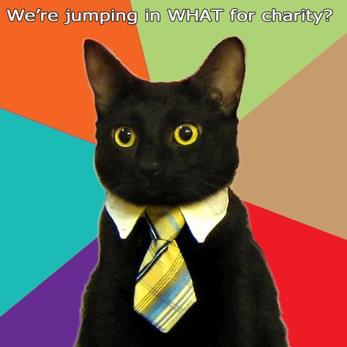 YDKJ-business-cat