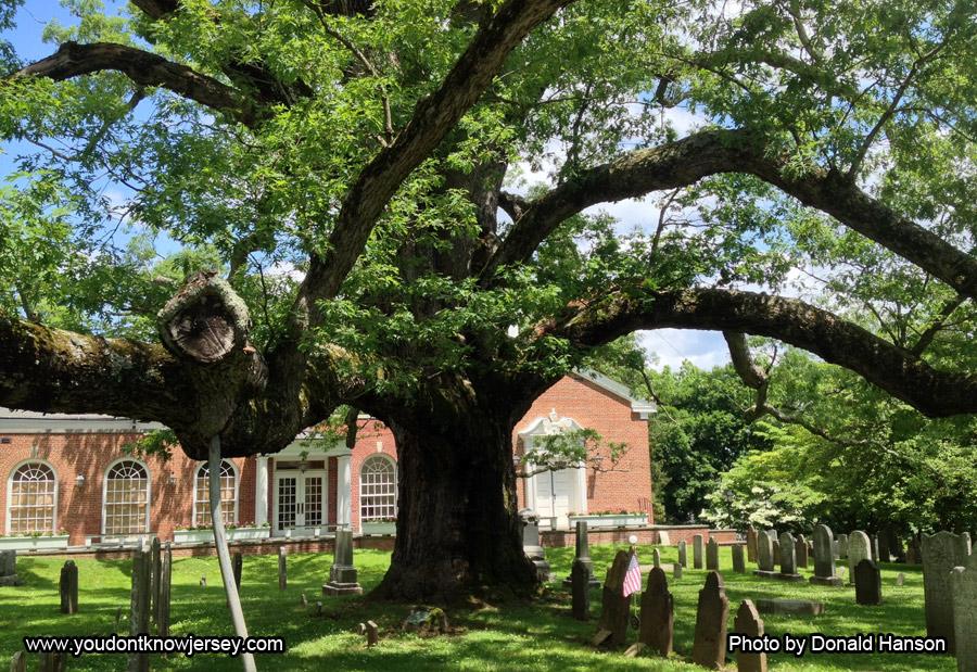 Old_Tree_8274