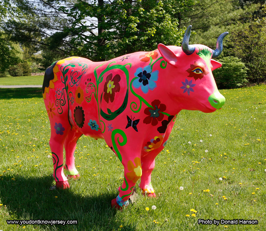 Guess_Where_Pink_Cow_5161