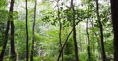 southmountainreservation5