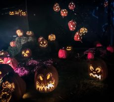glow_pumpkins