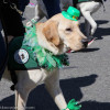 The Morris County Saint Patrick's Day Parade Goes to the Dogs – Literally