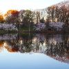 Cherry Blossoms at Sunrise in Branch Brook Park – Photo Gallery